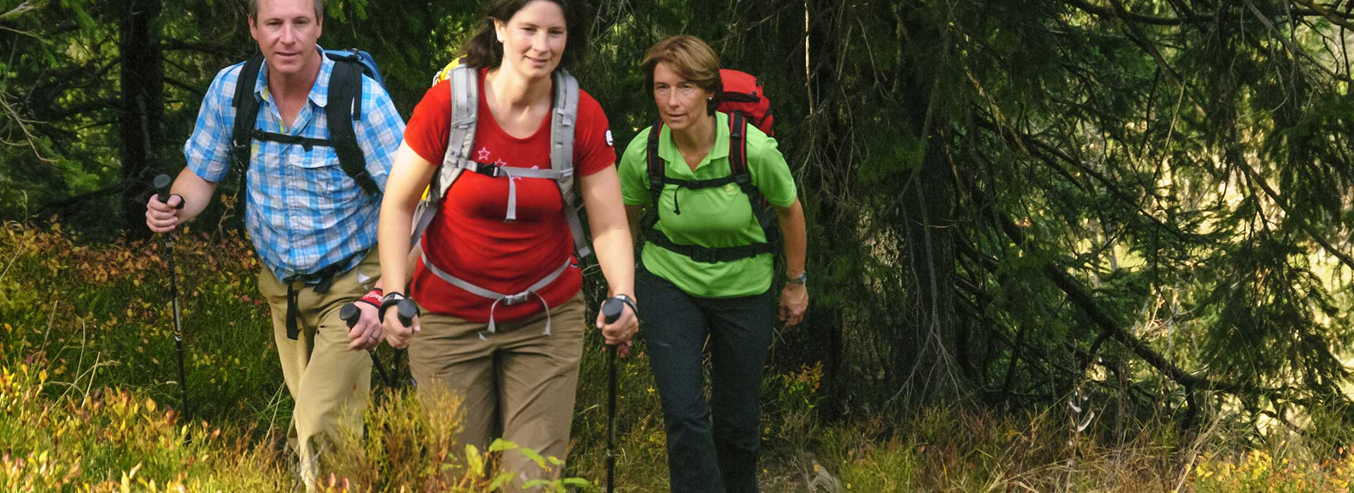 Wandergruppe bei einer Gruppenreise im Wald | © ARochau - fotolia.com