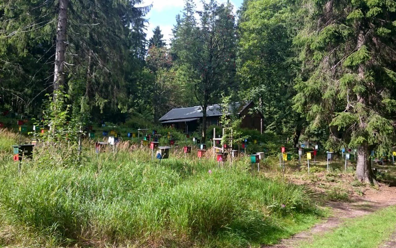 Bienen Belegstation Oberhof | Bienen Hotels am Schlossberg
