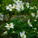Blühende Blumen im Rennsteiggarten Oberhof