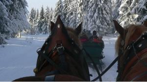 Kutschfahrt im Winter | © Tourist Information Oberhof