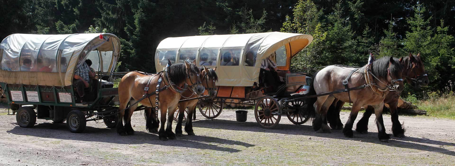 Planwagenfahrt für Gruppenreise im Thüringer Wald