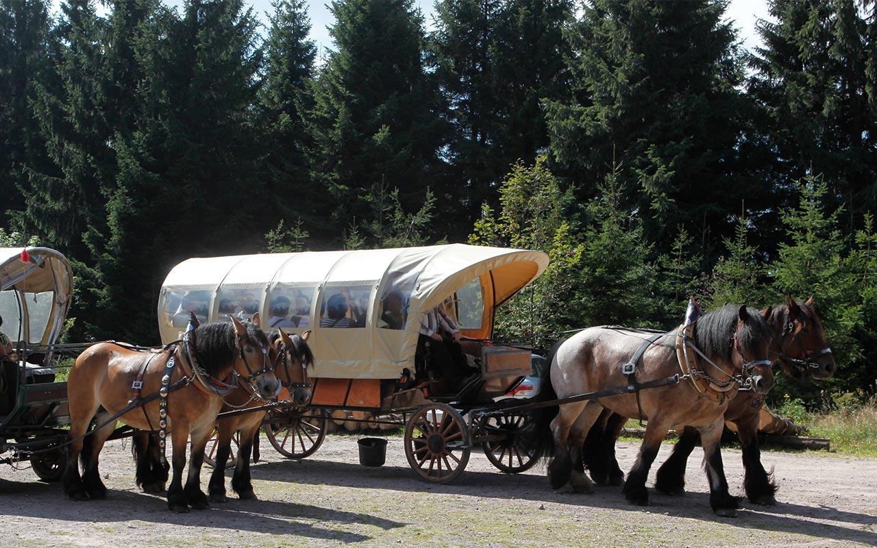 Planwagenfahrt | © Tourist Information Oberhof