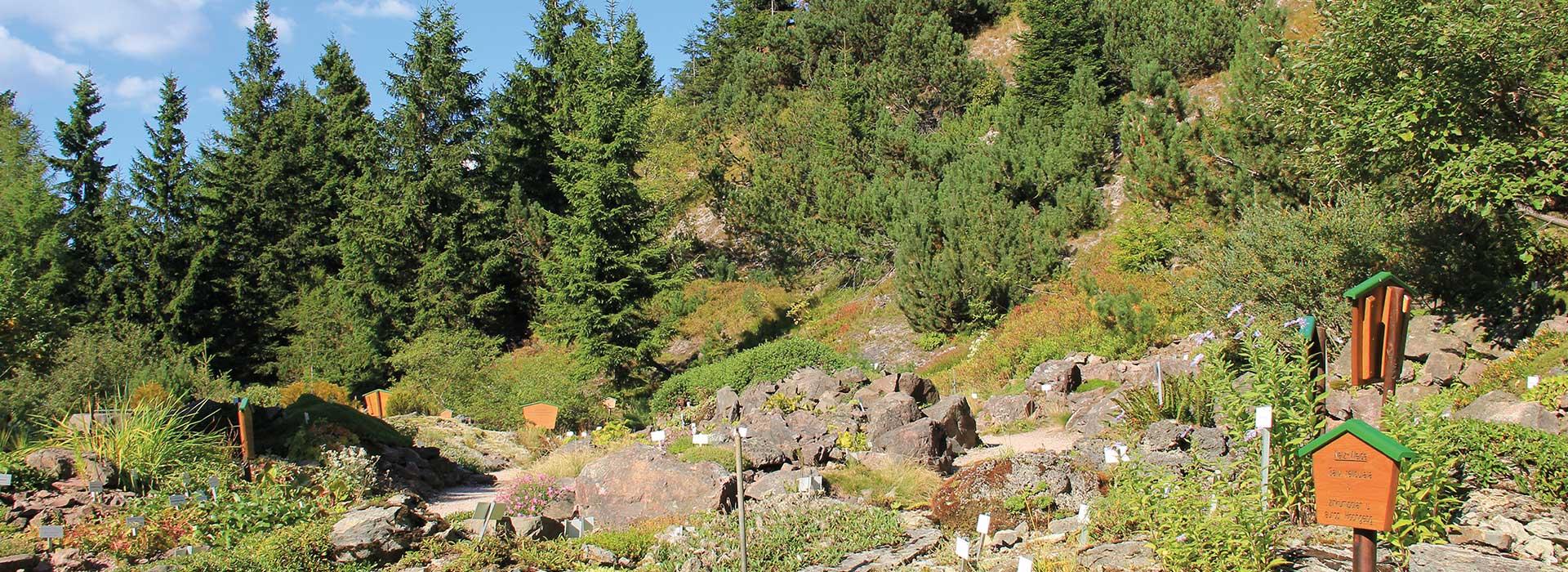Rennsteiggarten Oberhof Schaunanlage Ausflug für Gruppen