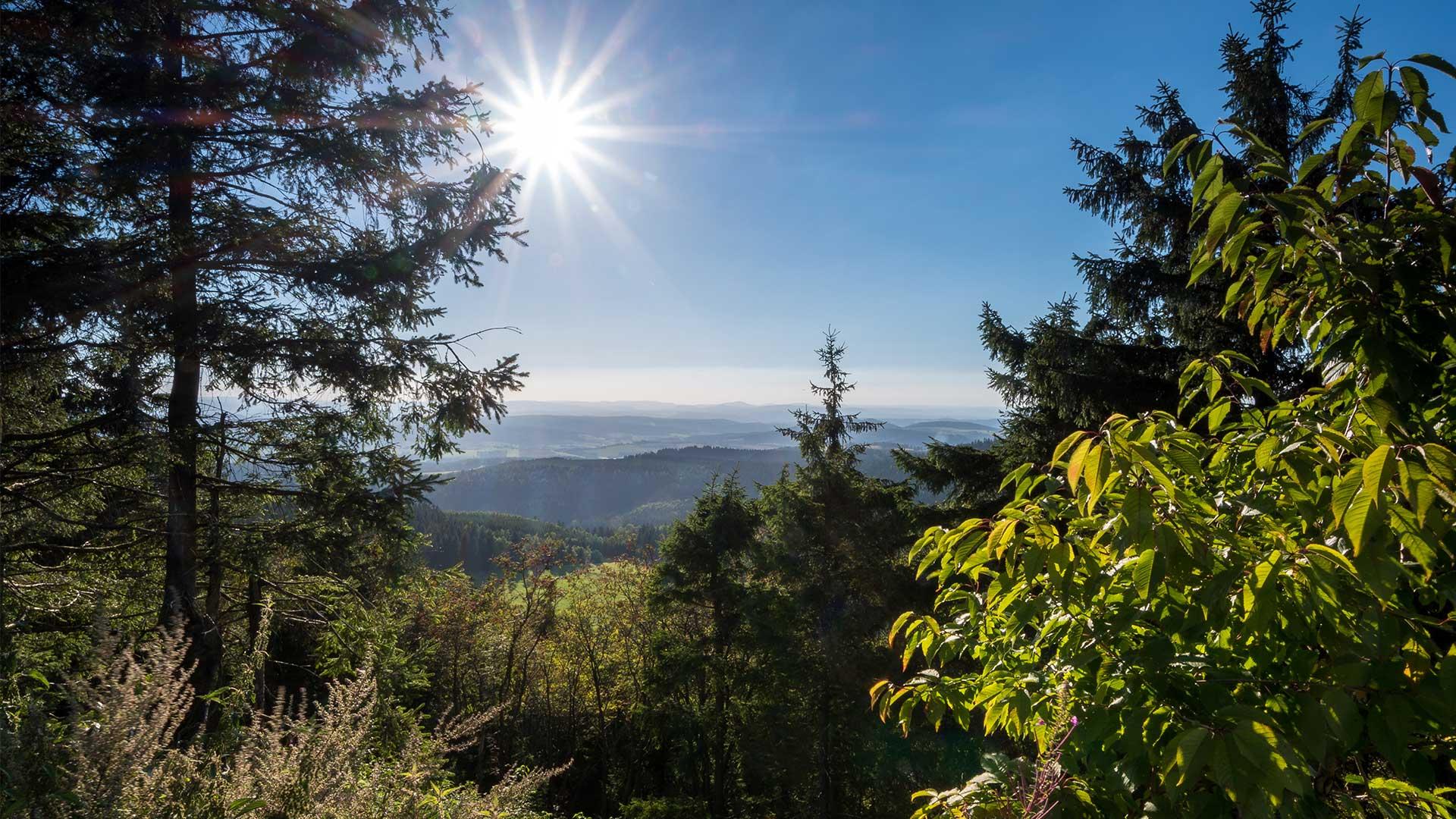 Thüringer Wald | © mp1982_06 - fotolia.com